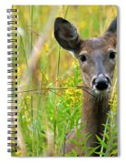Doe In Morning Dew Spiral Notebook