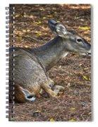Doe Lying Down Spiral Notebook