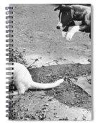 Dog Jumping On An Unsuspecting Kitten Spiral Notebook