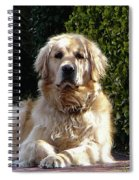Dog On Guard Spiral Notebook