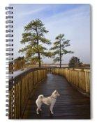 Shiba Inu On Path Spiral Notebook