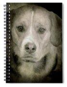 Dog Posing Spiral Notebook