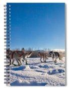 Dog Team Pulling Sled Spiral Notebook