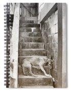 Dog Tired Spiral Notebook