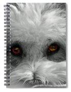 Coton Eyes Spiral Notebook