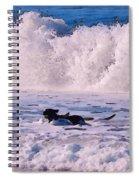 Dogs At Carmel California Beach Spiral Notebook