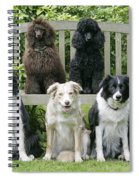 Dogs Sitting On Bench Spiral Notebook