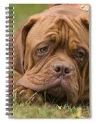 Dogue De Bordeaux Spiral Notebook