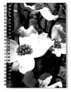 Dogwood 3 Spiral Notebook