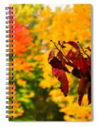 Dogwood And Fall Colors Spiral Notebook