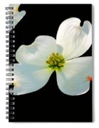 Dogwood Blossoms Painted For Jerry Spiral Notebook