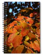 Dogwood In Autumn Colors Spiral Notebook