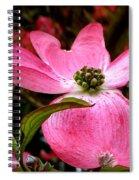 Dogwood Shows Pink Spiral Notebook