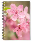 Dogwood Tree Bloom Close Up In Spring Spiral Notebook