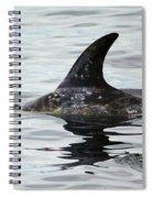 Dolphin In Monterey Spiral Notebook