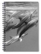 Dolphin Pod Spiral Notebook