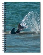 Dolphin Tale Spiral Notebook