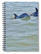 Dolphins 2 Spiral Notebook