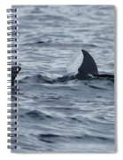 dolphins in Panama Spiral Notebook