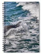 Dolphins Smile Spiral Notebook