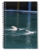 Dolphins Swimming Upside Down As Part Of Show Spiral Notebook