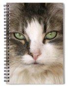 Domestic Cat Spiral Notebook