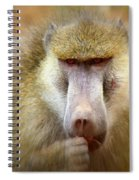 Dominant Male Baboon Spiral Notebook
