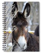 Donkey And The Mule Spiral Notebook