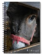 Donkey Behind Fence Spiral Notebook
