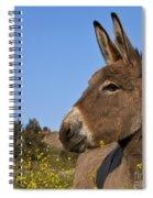 Donkey In Greece Spiral Notebook