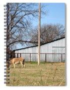 Donkey Lebanon In Oklahoma Spiral Notebook