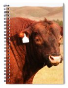 Dont Mess With The Bull Spiral Notebook