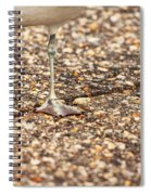 Don't Step On The Crack Spiral Notebook