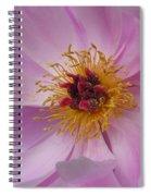 Doreen Spiral Notebook