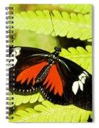 Doris Longwing Butterfly Spiral Notebook