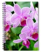 Doritaenopsis Flower Spiral Notebook