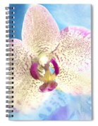 Dotted Spiral Notebook