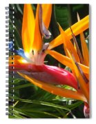 Double Bird Of Paradise - 1 Spiral Notebook