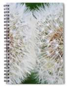 Double Dandelion Wishes Spiral Notebook