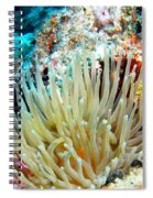 Double Giant Anemone And Arrow Crab Spiral Notebook