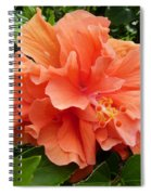 Double Peach Hibiscus Spiral Notebook