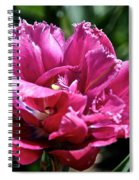 Double Pink Fringe Spiral Notebook