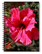 Double Red Spiral Notebook