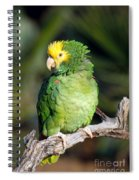Double Yellow Headed Parrot Spiral Notebook