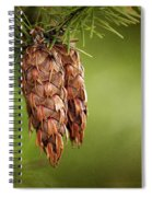 Douglas Fir Cones Spiral Notebook