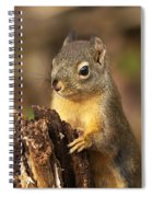 Douglas Squirrel On Stump Spiral Notebook