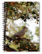 Dove In Autumn Oak Tree Lower Lake Ca Spiral Notebook