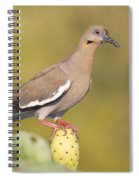 Dove On A Cactus Bud Spiral Notebook