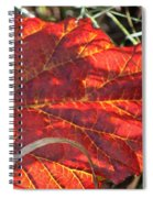 Down But Not Out Spiral Notebook