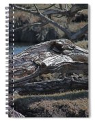Down Tree Along Creek Spiral Notebook